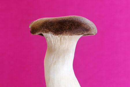 Photoprints, posters, mushrooms